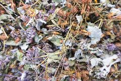 Recoja las hierbas secas fotografía de archivo libre de regalías