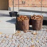 Recolhendo as folhas de outono, Éstocolmo Imagem de Stock