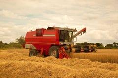 Recolhendo a colheita da cevada Fotos de Stock Royalty Free
