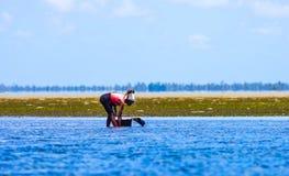 Recolhendo mexilhões com maré baixa Imagem de Stock
