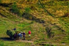 Recolhendo o feno nas montanhas Carpathian Fotografia de Stock Royalty Free