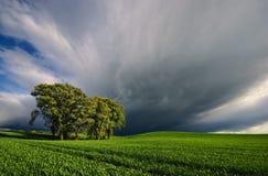 Recolhendo a tempestade sobre o campo de trigo Imagens de Stock Royalty Free