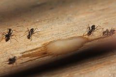 Recolhimento das formigas foto de stock