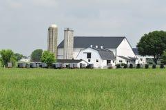 Recolhimento dos carrinhos de Amish imagem de stock royalty free
