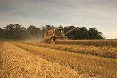 Recolhimento na colheita. Foto de Stock