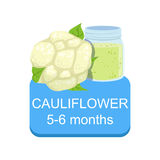 Recommended Time To Feed The Baby With Fresh Cauliflower Cartoon Info Sticker With Fresh Vegetable And Puree In Jar Stock Photo