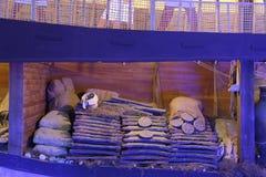 Reconstrucción de un lagan en museo del castillo de Bodrum Fotos de archivo libres de regalías