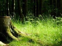 Reconstrucción, luz del sol suave en bosque imagen de archivo