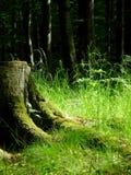 Reconstrucción, luz del sol suave en bosque Fotos de archivo libres de regalías