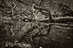 Dead tree - sepia tint Royalty Free Stock Image