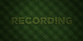 RECORDING - fresh Grass letters with flowers and dandelions - 3D rendered royalty free stock image Stock Photo