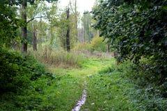 Recorrido del bosque Imagen de archivo