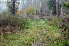 Recorrido del bosque Imagenes de archivo