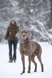 Recorriendo un perro imagen de archivo libre de regalías