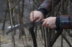 Recorte de arbustos con un handsaw imagen de archivo