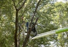 Recorte de un árbol Fotografía de archivo libre de regalías