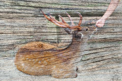 A recouvert l'amitié entre le touriste et bois d'AON de cerfs communs le vieux Photo libre de droits