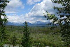Recovering Burn Area - Montana stock photos