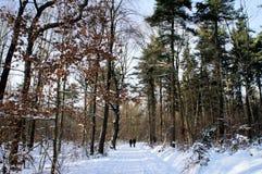 Recreatie in de winterbos Royalty-vrije Stock Fotografie