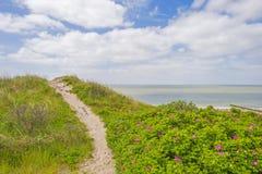 Recreatief die strand langs de Noordzee van een duin in de lente wordt bekeken royalty-vrije stock foto