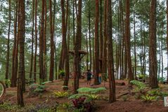 Recreation area of ​​the Pinus Kalilo Forest, Kaligesing Purworejo Indonesia stock photography