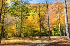 Clearing in a Forest on a Sunny Autumn Day. Recreation Area in a Forest on a Sunny Autumn Day. Beautiful Autumn Colours. Macedonia Brook State Park, CT Stock Photos