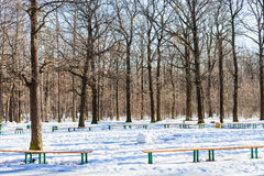 Recreation area in oak tree grove of urban park. In sunny winter day Royalty Free Stock Photography