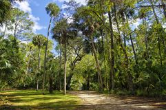 The recreation area in the Ocala National Forest located in Juniper Springs Florida. USA royalty free stock photo