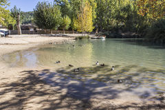 Recreation area on the River Jucar,Some ducks swim in the water, Stock Photography