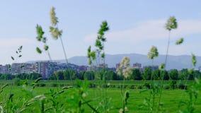 Recreation area in Zagreb stock video