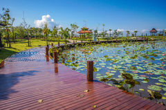 Recreation Park. Wuth wooden wakway and lotus swamp Royalty Free Stock Images