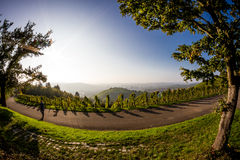 Recreation in the vineyards royalty free stock images