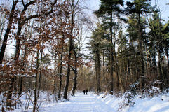 Recreation in winter forest Royalty Free Stock Photography