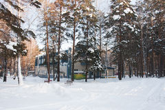 Recreation in the winter pine forest, the city of Tyumen Stock Photo