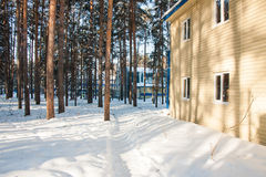 Recreation in the winter pine forest, the city of Tyumen Royalty Free Stock Photography