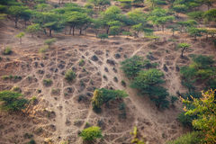 Recreational Area near Pushkar, India with Crisscrossing Offroad Stock Photography