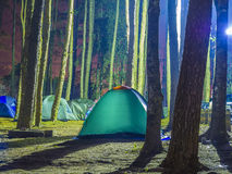 Recreational camping tents with silhouetted of the alpine trees Stock Photos