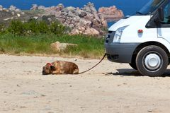 Recreational vehicle and a dog Stock Photo