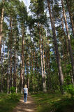 Recreational walk in a forest Royalty Free Stock Photography