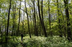 Recreational walk in a green forest Royalty Free Stock Photo