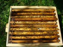 Rectángulo 3 de la abeja Foto de archivo