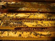 Rectángulo 4 de la abeja Foto de archivo libre de regalías