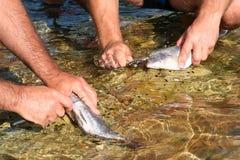 Rectángulo de bacalaos Fotos de archivo libres de regalías