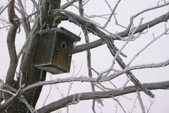 Rectángulo de pájaro Foto de archivo libre de regalías