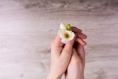 Rectángulo de regalo con las flores Imagen de archivo