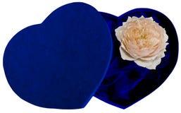 Rectángulo del corazón con la rosa aislada Imagen de archivo libre de regalías
