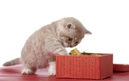 Rectángulo del gatito y de regalo fotos de archivo libres de regalías