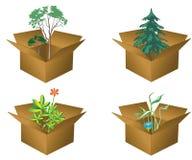 Rectángulos con las plantas Fotos de archivo libres de regalías