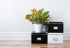 Rectángulos de almacenaje y planta verde en un cuarto Imágenes de archivo libres de regalías