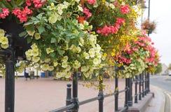 Rectángulos de la flor Fotos de archivo libres de regalías